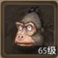 大猩猩寶寶