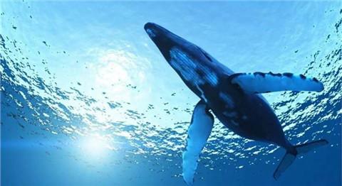 简笔画海洋动物蓝鲸
