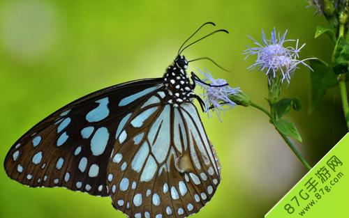 阴阳师信物蝴蝶