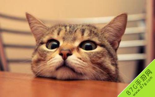 阴阳师信物猫