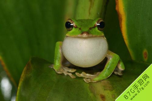 阴阳师青蛙瓷器信物图片是什么 青蛙信物图片
