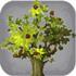 迷你世界果木树苗