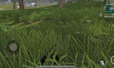 光荣使命卧倒在草丛后多远的敌人看不见你
