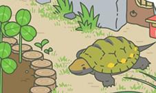 青蛙旅行蜗牛乌龟蜜蜂出现时间 青蛙朋友出现规律
