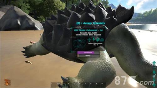 方舟生存进化乌龟驯化