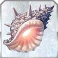追憶的貝殼