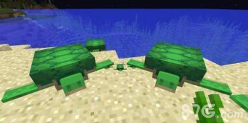 我的世界海龟能驯服吗