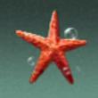 吕宋棘海星