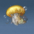 紫海刺水母