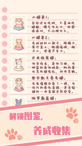 云撸猫咪截图5