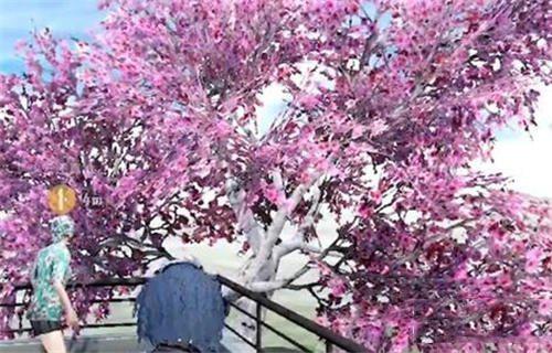 和平精英国际服樱花树1