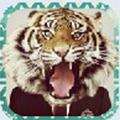 兽面app
