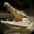 終極鱷魚模擬器