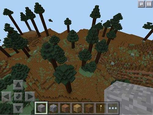 我的世界針葉林種子分享