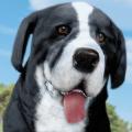 小狗農場模擬器